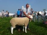 Champion Shearling Ram